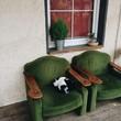 cuddle cat - 192781141