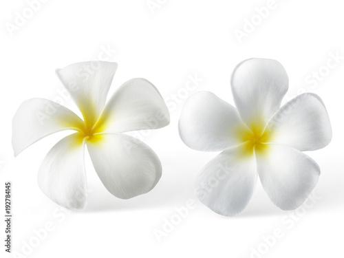Plexiglas Plumeria frangipani flower isolated on white background