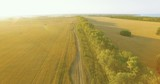 UHD 4K aerial view. Low flight over tree line and yellow wheat rural field at sunny summer day. Green trees, blue sea and sun rays on horizon. Horizontal movement - 192784979
