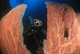 Scuba diver. Young Asian woman scuba diving - 192791180