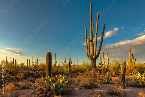 Landscape at Saguaro National Park at sunset, Tucson, Arizona, USA - 192808390