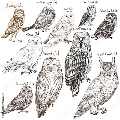 illustration-drawing-style-of-owl-birds-collection