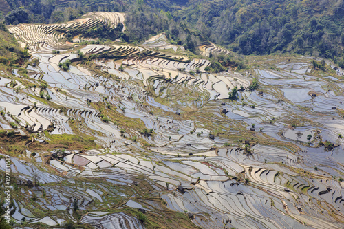 Canvas Rijstvelden Paddy fields, Rice terraces. In Yunnan province China