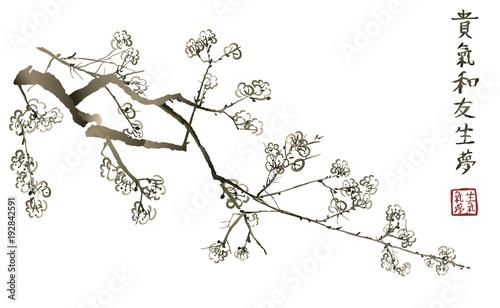 Foto op Canvas Art Studio Branch of blossoming sakura . Japanese cherry tree