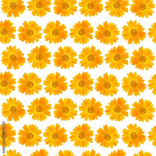 Seamless pattern of beautiful yellow flowers