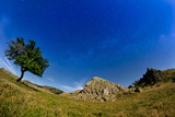 Beautiful landscape with a blue starry sky, a lonely tree and rocks, Dobrogea, Romania - 192848189