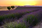 Champ de lavande, coucher de soleil. Plateau de Valensole, Provence, France. - 192848570