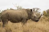 rhinocéros dans la savane africaine - 192852701