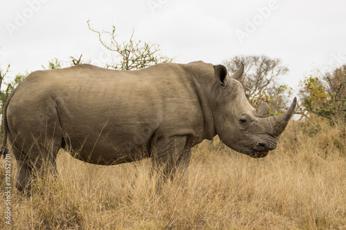 Plexiglas Neushoorn rhinocéros dans la savane africaine