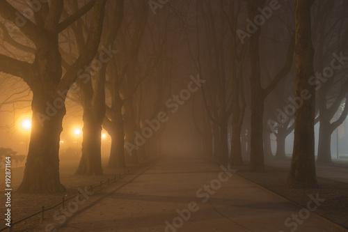 Aleja płaskich drzew w zimną, mglistą noc