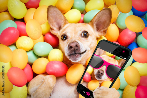 Staande foto Crazy dog happy easter dog with eggs selfie