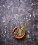 Fresh, ground and dried bay leaf - 192885900