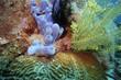 Quadro blauer Schwamm Haliclona sp. und gelber Haarstern (Comanthus sp.