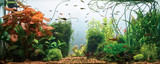Panoramic view of planted tropical fresh water aquarium with white background - 192905156