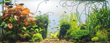 Panoramic view of planted tropical fresh water aquarium with white background - 192905160