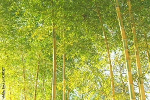Fotobehang Bamboe 爽やかな竹林