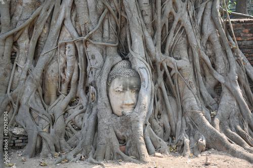 Papiers peints Buddha Buda en las raíces