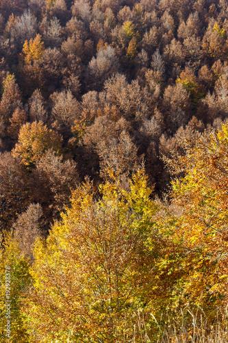 Plexiglas Herfst wood texture of autumn tree