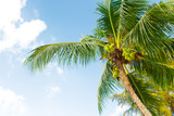 coconut palm tree on sky background - 192939741