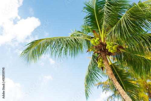 Foto op Canvas Natuur coconut palm tree on sky background