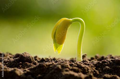 Nut Seed Germination with nature Green background