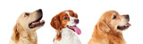 Beautiful Portrait Of Three Dogs Looking Up Wall Sticker