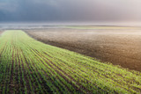 The ploughed field and young wheat field - 192948700