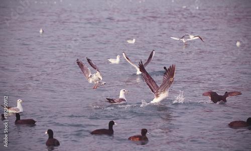 Tuinposter Lavendel утки и чайки плавают на море