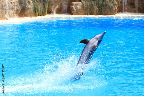 Fotobehang Dolfijn A dolphin playing in blue water, Tenerife