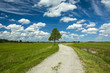 Pebble road, tree and clouds in the sky - 192955728