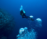 Diver and bubbles. - 192963552