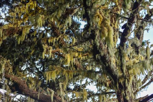 Poster Canarische Eilanden Spain Gomera island fog forest bosque del cedro