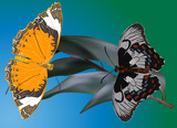 two butterflies on blue and green background - 192972515