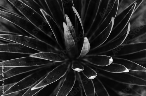 cactuses. black and white concept - 192973191