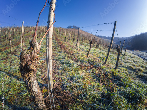 Icy and frozen German vineyards in winter - 192974180