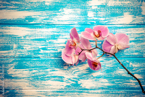 Fototapeta Branch of a purple orchid lies on a blue wooden background