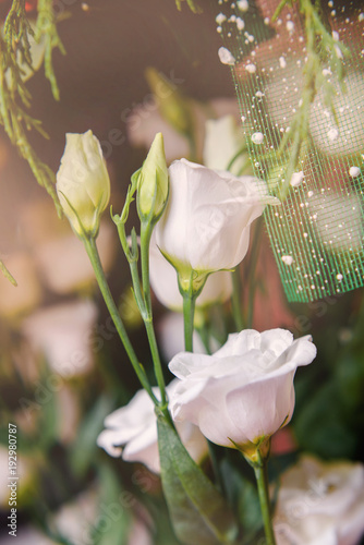 A bouquet of white carnations shot close-up A bouquet of white carnations shot close-up