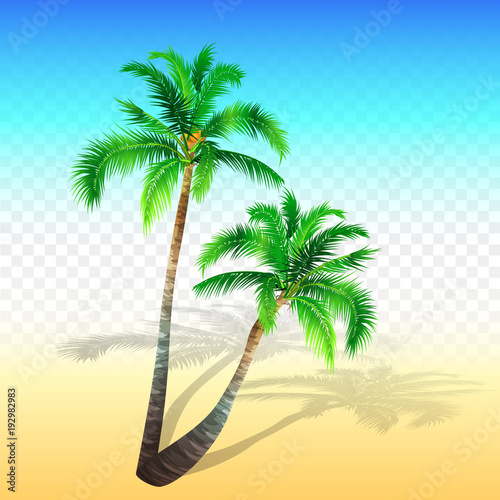 Two palm tree beach and transparent background