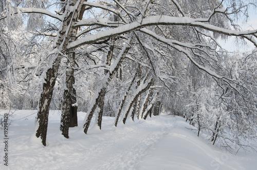 Papiers peints Vieux rose Winter landscape with a park