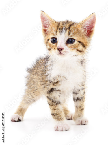 Aluminium Kat Kitten on white background.