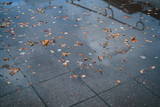 urban autumn background with fallen leaves on wet pavement in a city - 192993955