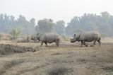 Indian rhinoceros in Bahawalpur National Park Pakistan - 192998303