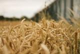 Crop Growth - 192998917