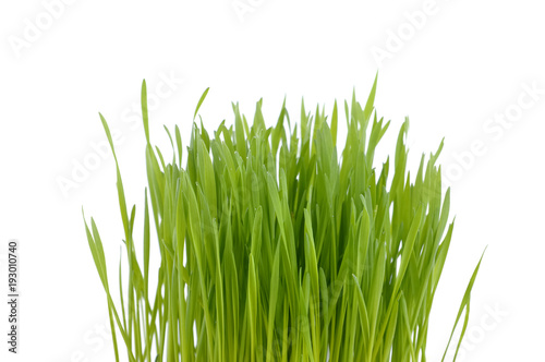 Keuken foto achterwand Gras greenery clump of grass isolated on white background