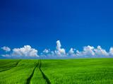 green field with blue heaven - 193011702