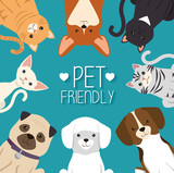 Dogs And Cats Pets Friendly  Illustration Design Wall Sticker