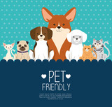 dogs and cats pets friendly vector illustration design - 193015924