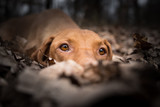 Closeup head of dog in winter fallen leaves