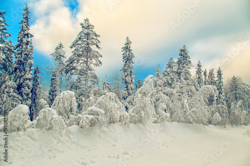 Aluminium Beige Stunning winter landscape with snow-covered trees.