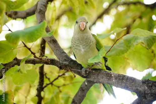 Aluminium Papegaai green parrot bird on wood branch